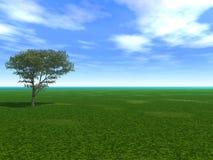 空的槭树 免版税库存图片