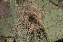 空的沙漠鸟` s巢在沙漠 图库摄影
