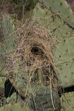空的沙漠鸟` s巢垂直  库存照片