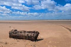 空的海滩漂流木头蓝天 免版税图库摄影