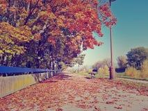 空的秋天散步在晴天 五颜六色的树和叶子 库存图片