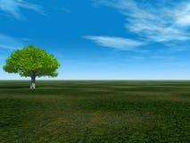 空的绿色 库存照片
