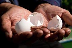 空的蛋壳在一个年长人的手上 作为背景诱饵概念美元灰色吊异常分支 免版税图库摄影