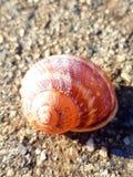 空的蜗牛壳 库存图片