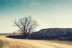 空的路和一棵干燥树 库存图片