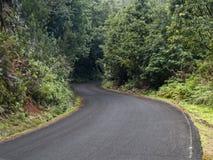 空的路在森林里 图库摄影