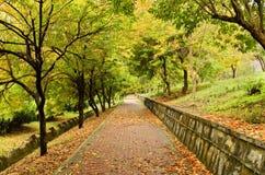 空的道路在秋天 库存照片