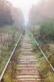 空的铁路在有雾的森林里进来 库存照片