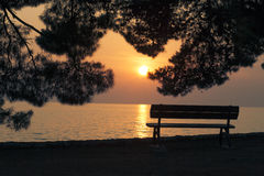 空的长凳剪影在日落的杉树下 库存照片