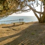 空的长凳在俯视斯克里普斯码头的树下 库存图片