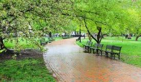 空的长凳在绿色公园 库存照片