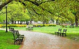 空的长凳在绿色公园 库存图片