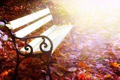 空的长凳秋天公园 库存图片