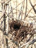 空的鸟的巢冬天 库存照片