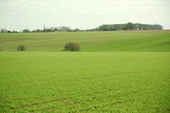 空的绿色领域 库存照片