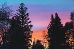 空间日落您文本的结构树 免版税库存图片