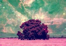 空间树汇集 图库摄影