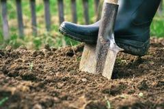 穿一双胶靴的脚开掘地球在有老锹关闭的庭院里 库存照片