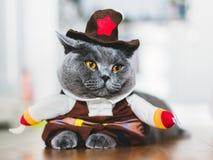 穿一套滑稽的服装的英国shorthair猫 免版税库存图片