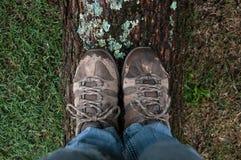 穿上鞋子站立在下落的树干的妇女 库存照片