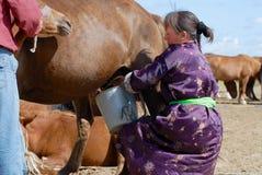 穿传统礼服的蒙古妇女在Kharkhorin,蒙古挤奶在一个干草原的母马 库存图片