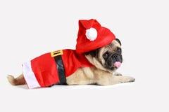 穿圣诞老人服装的逗人喜爱的哈巴狗小狗 图库摄影