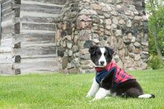 穿夹克的小狗 免版税图库摄影