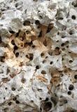 穿孔的岩石 库存图片