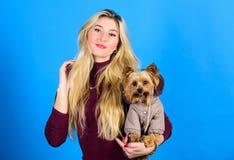 穿戴冷天的狗 哪些狗品种应该穿外套 妇女运载约克夏狗 狗需要衣裳 免版税库存图片