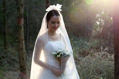 穿新娘婚装的亚裔新娘站立在杉木森林里 库存图片