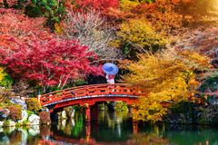 穿日本传统和服的亚裔妇女在秋天公园 日本 免版税库存图片