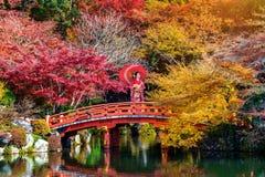 穿日本传统和服的亚裔妇女在秋天公园 免版税库存照片