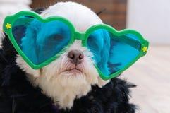 穿时装的迷人的狗 库存图片