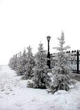 穿的冷杉雪结构树 免版税库存图片