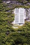 穿的房子常春藤白色视窗 免版税库存照片