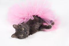 穿着一件桃红色芭蕾舞短裙的灰色猫 免版税库存照片