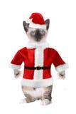 穿着圣诞老人衣服的暹罗猫 免版税库存照片