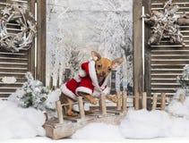 穿着在冬天风景的奇瓦瓦狗小狗圣诞节衣服 库存照片