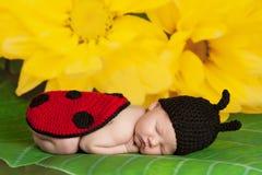 穿着瓢虫服装的新出生的女婴 库存照片