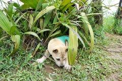 穿绿色衬衣的小狗画象放松在草 库存照片
