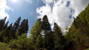 穿过春天绿色森林的汽车视图,有在蓝天的蓬松云彩的,侧向透视 股票视频