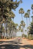 穿过枣椰子林场 免版税库存照片