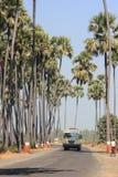 穿过枣椰子林场 免版税图库摄影