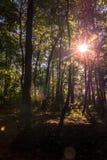 穿过树的太阳光芒 库存图片