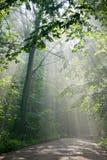 穿过森林地面轻的路的射线 免版税库存图片