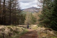 穿过森林的远足者,当走西方高地方式时 免版税库存照片
