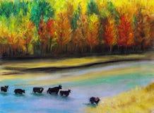 穿过河的公牛是 库存图片