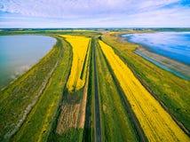 穿过生动的黄色油菜的农村路鸟瞰图调遣在两个湖之间 免版税库存图片