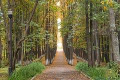 穿过秋天公园的道路 免版税库存图片