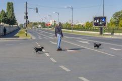 穿过街道的四轮溜冰者 免版税图库摄影